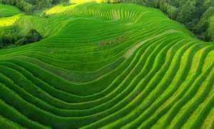 FIP Ribbon - Liansan Yu (China)  Green Terrace