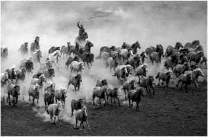 PhotoVivo Gold Medal - Huijun Liang (China)  Gallop Horse