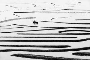 PhotoVivo Gold Medal - Jingmin Wu (China)  Line