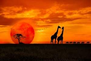 APU Gold Medal - Shehan Trek (Sri Lanka)  Scene At The Sunset