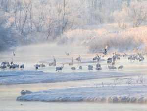 PhotoVivo Gold Medal - Youdong Deng (China)  Winter Gathering