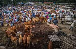 SIPC Merit Award - Binyuan Li (China)  Bull Fair