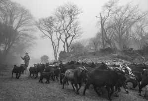 SIPC Merit Award - Peixia Xie (China)  Herd