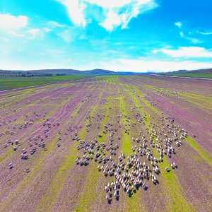 PSA HM Ribbons - Liangjin Liu (China)  Grassland Pastoral