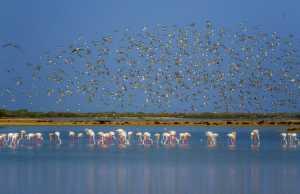 Circuit Merit Award e-certificate - Shehan Trek (Sri Lanka)  Feathery Flock