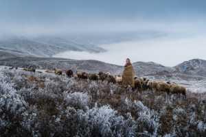 APU Honor Mention e-certificate - Hongwei Zhong (China)  Sheep Herding 1