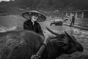 PhotoVivo Gold Medal - Yongquan Cao (China)  Old Man And Cow