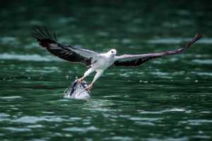 PhotoVivo Gold Medal - Yanxiang Wang (China)  Catch