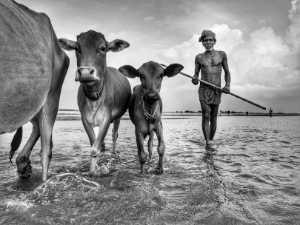 Circuit Merit E-cert - Debabrata Hore (India)  Along With Pets