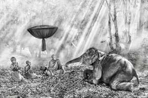 PhotoVivo Gold Medal - Say Boon Foo (Malaysia)  Elephant With Monks 3