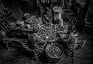 PhotoVivo Gold Medal - Chaoyang Cai (China)  Farm