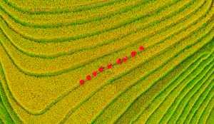 PhotoVivo Honor Mention e-certificate - Jun Zhao (China)  Autumn Harvest Of Yao