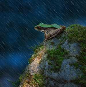 PhotoVivo Gold Medal - Kecheng Pu (China)  Frog At Rainy Night