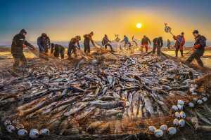 APU Gold Medal - Yuk Fung Garius Hung (Hong Kong)  Winter Fishing 1