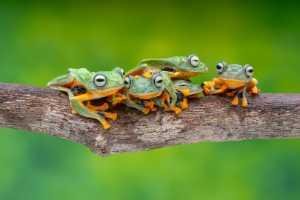 Circuit Merit Award e-certificate - Hein Htet (Singapore)  Frogs Playing Leapfrog 06