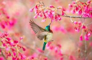 APU Gold Medal - Xiang Li (China)  Welcome Spring