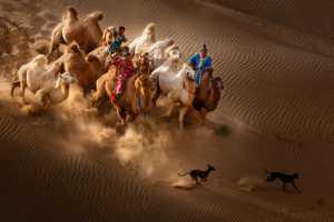 Circuit Merit Award e-certificate - Xiping An (China)  Camel Dog