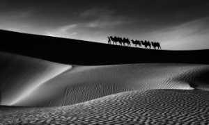 PhotoVivo Gold Medal - Baoli Gong (China)  Dream Camel Bell