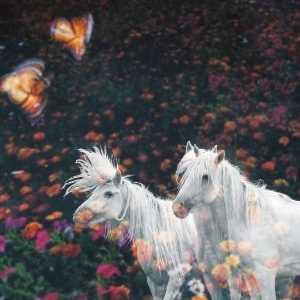 PhotoVivo Gold Medal - Weining Lin (China)  Fine Horse 5