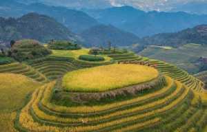 FIP Ribbon - Quansheng Ma (China)  Yaozhai Dusk