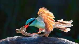APU Honor Mention e-certificate - H. W. Chan (Hong Kong)  Bird Snake War 05