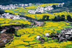 APAS Gold Medal - Yonghe Wang (China)  Splendid Homeland