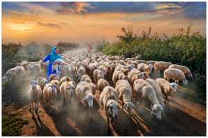 FIP Ribbon - Jeanne Chung (Hong Kong)  Happy Shepherding