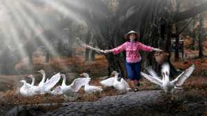 PhotoVivo Honor Mention e-certificate - Phillip Cheang (Malaysia)  Chasing Goose