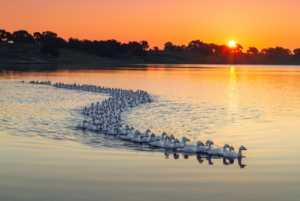Circuit Merit Award e-certificate - Zhonglin Huo (China)  Ducks In Spring