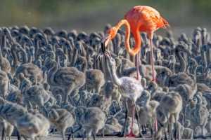 APU Gold Medal - Jing Li (China)  Flamingos 19