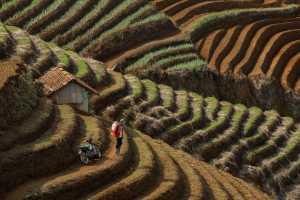 Circuit Merit Award e-certificate - Irine Wiguno (Indonesia)  Onion Farmer