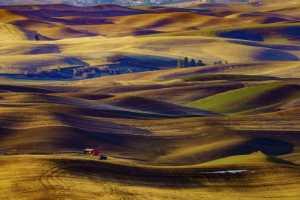 Circuit Merit E-cert - Min Li (China)  Prairie In Fall