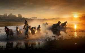 APU Gold Medal - Huimin Wang (China)  Horses Galloping In Water