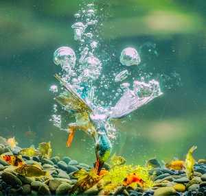 PhotoVivo Gold Medal - Chin-Fa Tzeng (Taiwan)  Dive To Underwater Fishing