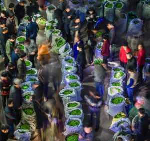 SIPC Merit Award - Chengle Zheng (China)  Symphony In Tea Market