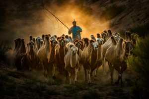 SIPC Bronze Medal - Lijun Shi (China)  Camels