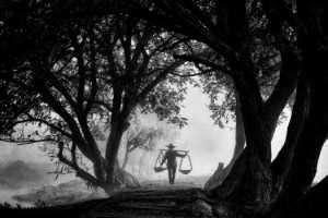 PhotoVivo Honor Mention e-certificate - Sze-Wah Chee (Singapore)  Trees Frame Farmer