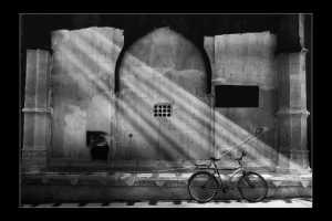 PhotoVivo Gold Medal - Suwarna Gawde (India)  Cycle