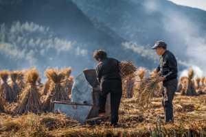 PhotoVivo Gold Medal - Cheng Zhu (China)  Busy Farmwork