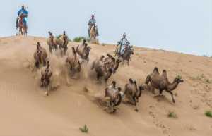GTPC Merit e-certificate - Mingyou Zhang (China)  Camel Catch