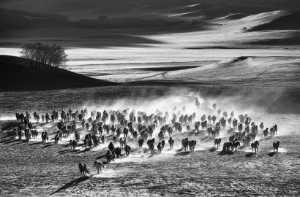 PhotoVivo Gold Medal - Wei Wang (China)  Ten Thousand Steeds Gallop