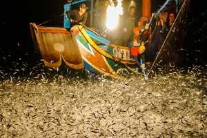 PhotoVivo Gold Medal - Lilo Chen (Taiwan)  Jumping Fish