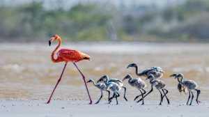 APU Gold Medal - Jing Li (China)  Flamingos 18