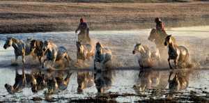 RPST Honor Ribbon - Lee Eng Tan (Singapore)  Mongol Horse Run