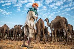 PhotoVivo Gold Medal - Xiu Liu (China)  People And Camels 1