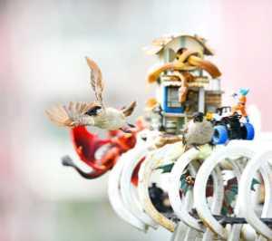 Circuit Merit Award e-certificate - Qing Xu (China)  Bird On The Toy 2