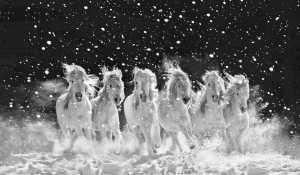 APAS Gold Medal - Juanjuan Shen (China)  Galloping In The Snow