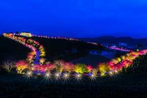 APU Honor Mention e-certificate - Banghua Pan (China)  Cherry Blossom Garden