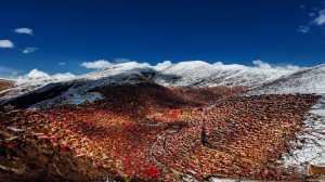 APAS Gold Medal - Xilian Li (China)  Red Serda