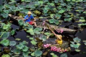ICPE Gold Medal - Thi Ha Maung (Myanmar)  Lotus Sellers